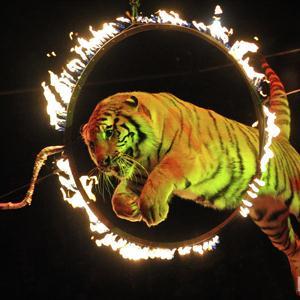 Цирки Копейска